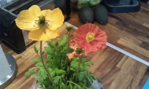 En blomma från Anna