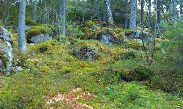 I skogen är det fortfarande grönt