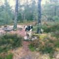 Promenad i skogen