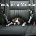 Måndag, jag gillar måndagar!